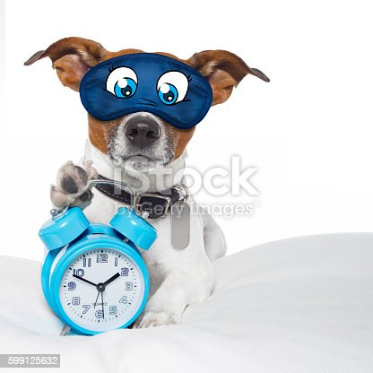 istock dog sleeping with clock 599125632