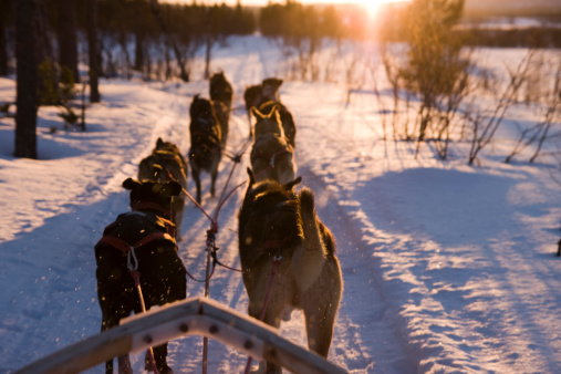 Dog Sleigh Stock Photo - Download Image Now