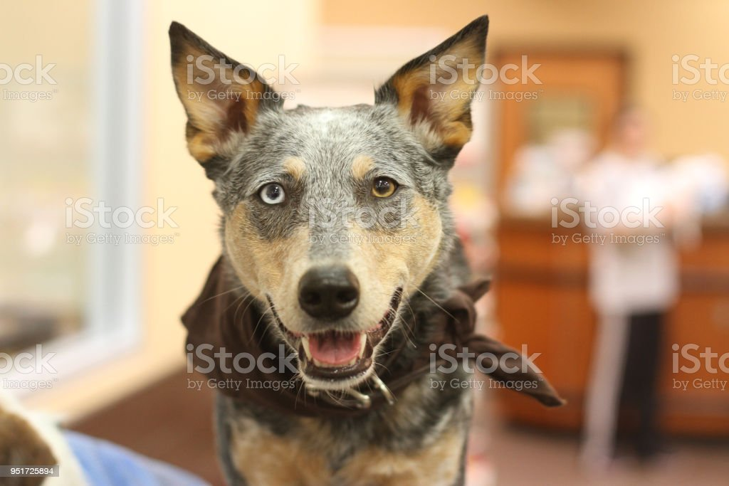 Dog Smiling in Store stock photo