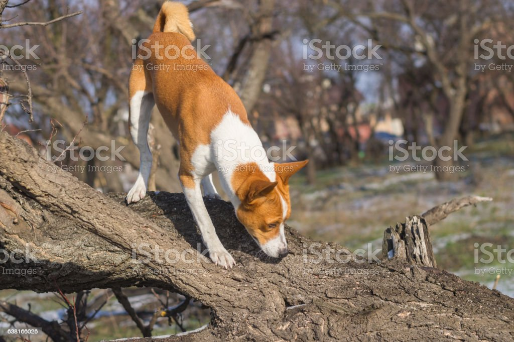 Dog sniffing around its territory stock photo