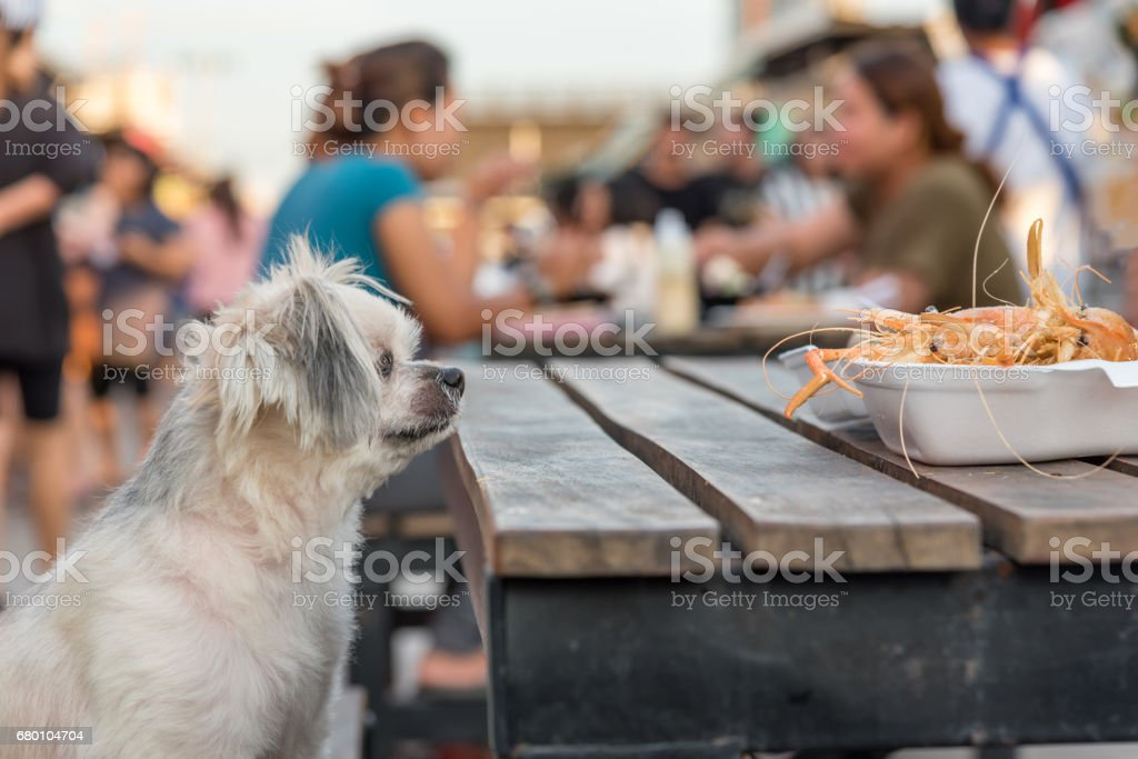 Dog So Cute Mixed Breed With Shihtzu Pomeranian And Poodle Sitting