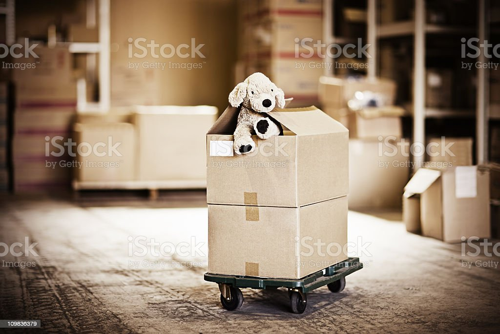 Dog soft toy looking out of carton box in warehouse. Taken on...