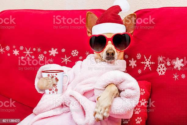 Dog spa wellness christmas holidays picture id621138422?b=1&k=6&m=621138422&s=612x612&h=yo5yymqaxpux69l9a0pjbto7gqtnjwmx ly qzcjqpq=