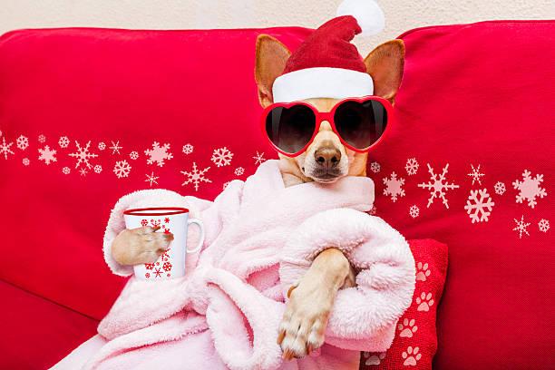 dog spa wellness christmas holidays stock photo