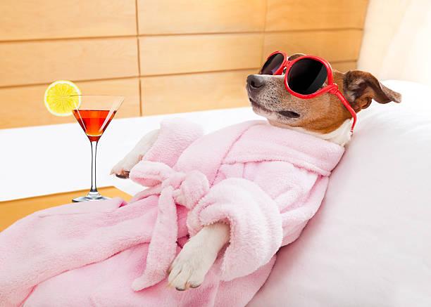 hund spa und wellness - hunde träger stock-fotos und bilder