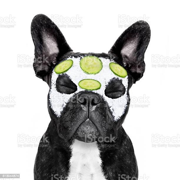 Dog spa wellness picture id513044874?b=1&k=6&m=513044874&s=612x612&h=jkx bx3mey4uhujm4nb7qnpmxthey u553mx1indpau=
