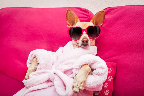 Dog spa wellness picture id541567792?b=1&k=6&m=541567792&s=612x612&w=0&h=ggw3jpaeshqkomfxsp0zt4gqvdqmlntf 0aetrv4mva=