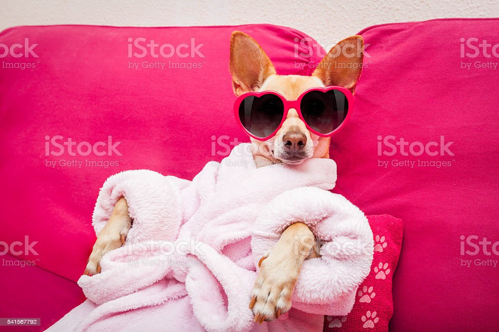 Perro wellness spa - foto de stock