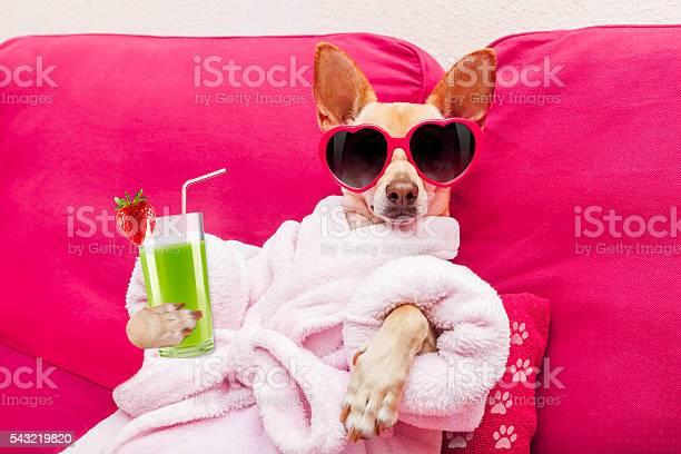 Dog spa wellness picture id543219820?b=1&k=6&m=543219820&s=612x612&h=ij38bnnrgt1l drbm2whjwvxbepy6nnrau ogoxkdk8=