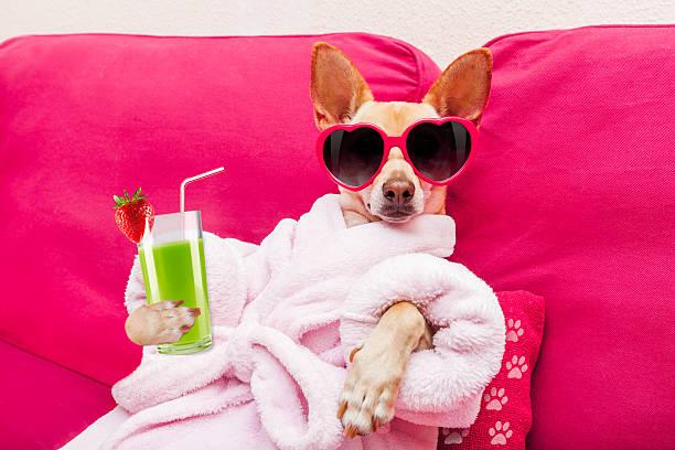 Dog spa wellness picture id543219820?b=1&k=6&m=543219820&s=612x612&w=0&h=ncjnn1jleaurjz8tqmfcgb5xfssionrhg6qebeuz  q=