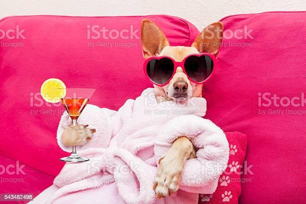 Dog spa wellness picture id543462498?b=1&k=6&m=543462498&s=612x612&h=piuoibp5dedfdtkcpre6tcmiettv1kkeiyhmlm xul8=