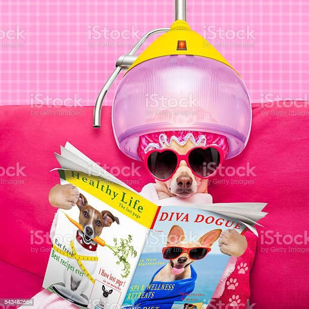 Dog spa wellness picture id543462554?b=1&k=6&m=543462554&s=612x612&h=yd6ltnod6umekvhacmrl4ttkcqgkzh2poecehpesblo=