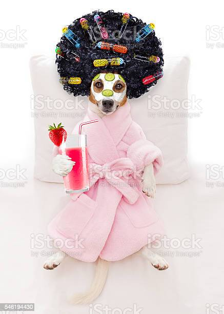 Dog spa wellness picture id546194430?b=1&k=6&m=546194430&s=612x612&h=iygkv3gwdnvkz4rzx8wdkpbepzrpqi6lkq3tizrjykg=