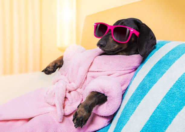 dog spa wellness salon stock photo