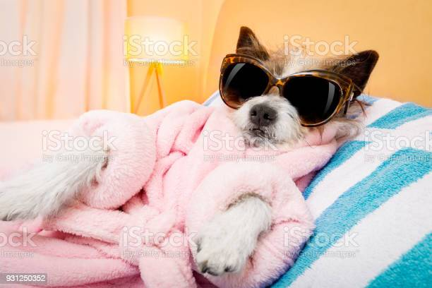Dog spa wellness salon picture id931250352?b=1&k=6&m=931250352&s=612x612&h=8miys slnb3sidar9qds zvm0vewyqcd8x 3acqinbi=