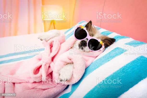 Dog spa wellness salon picture id931250472?b=1&k=6&m=931250472&s=612x612&h=ugia9k0uc7uptugng32enfrqfis1emg7lx1jsh0rb o=