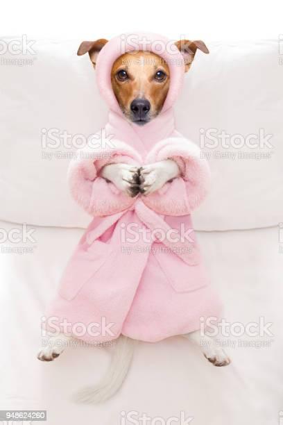 Dog spa wellness salon picture id948624260?b=1&k=6&m=948624260&s=612x612&h=4mhr0equb2ew667jiia9b vsfqsr7uolyis6a6wo3ho=