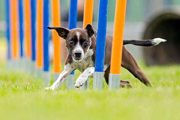 Dog sport picture id533519409?b=1&k=6&m=533519409&s=612x612&w=0&h=yb7rnlszngehj4inwiftrypb2oojxnrzubiobdjg7ui=