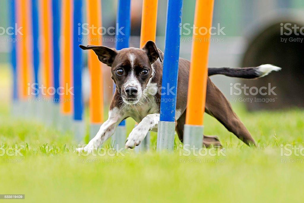 Perro de deportes - foto de stock