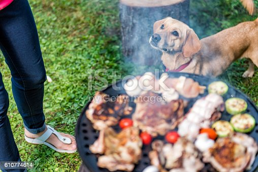 istock Dog standing close to barbecue 610774614