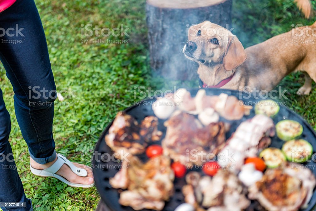Dog standing close to barbecue stock photo