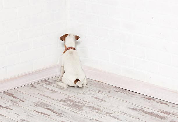 Dog standing in the corner stock photo
