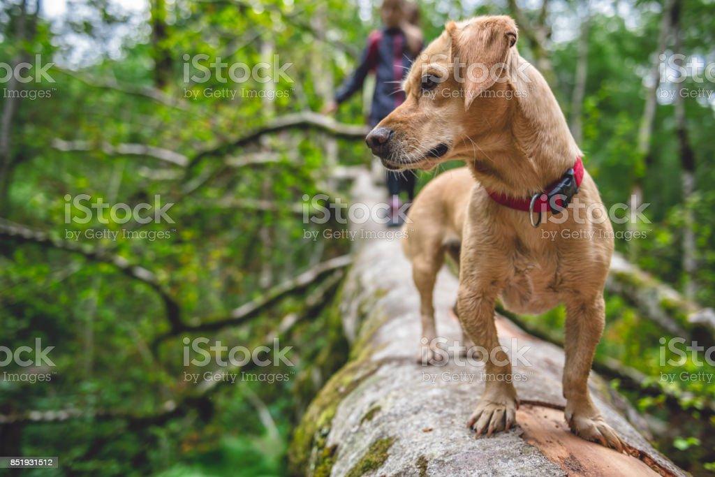 Dog standing on a tree log stock photo