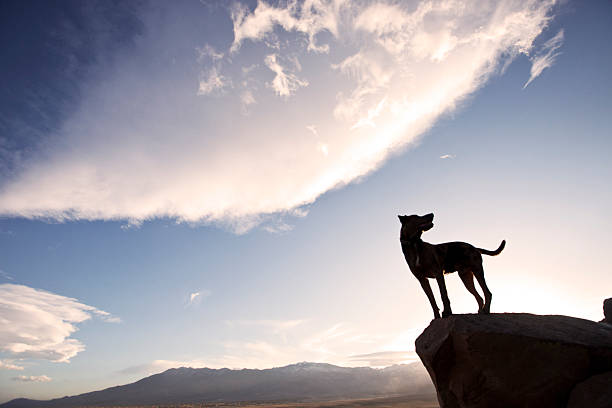Dog standing on the edge stock photo