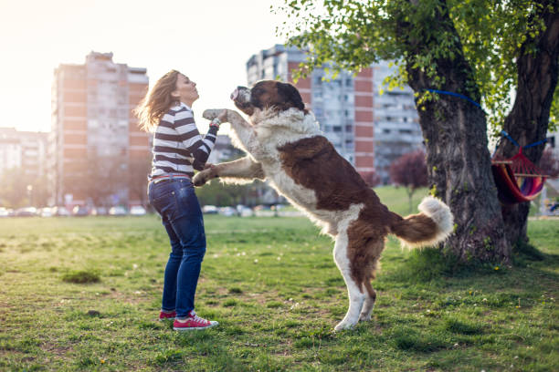 dog standing - dog jumping stock photos and pictures