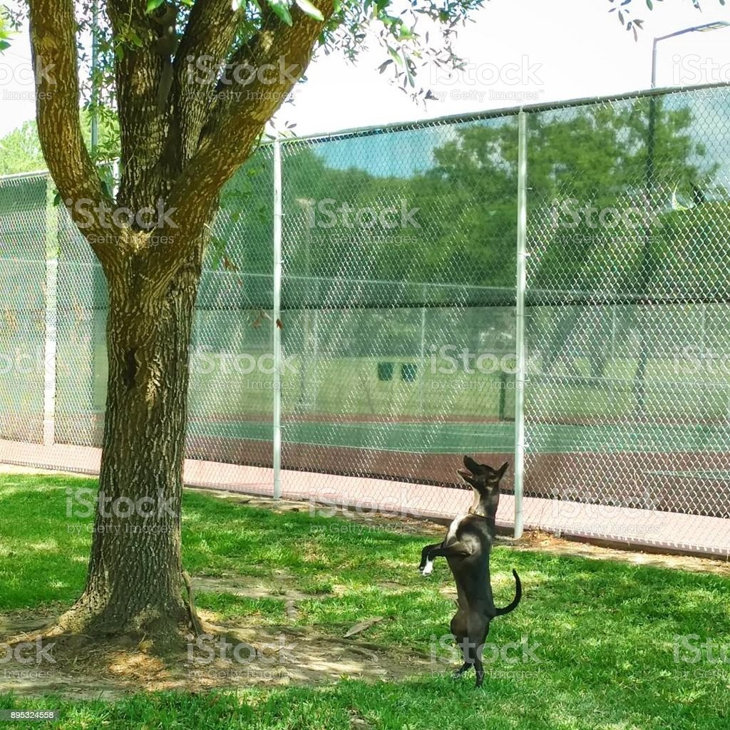 Dog Stands Up to Look at Squirrel in Tree stock photo