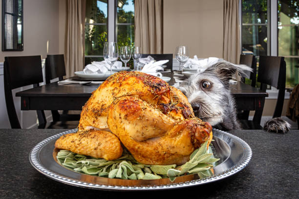 Dog Stealing Thanksgiving Turkey Bad dog jumping up on counter stealing Thanksgiving holiday dinner turkey thanksgiving pets stock pictures, royalty-free photos & images