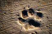 Dog steps and footprints on earth