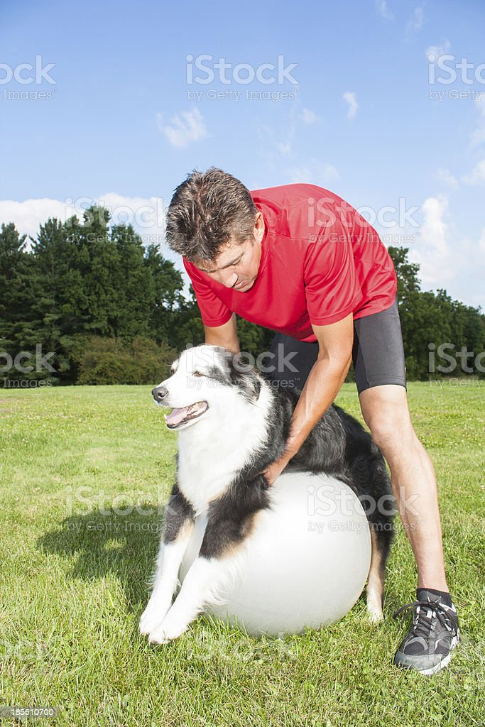 Dog stretching over yoga ball royalty-free stock photo