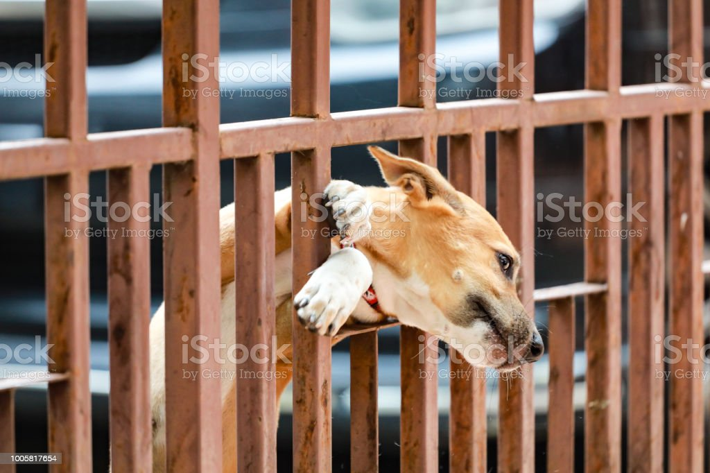 Dog Stuck At The Door Stock Photo More Pictures Of Aging Process