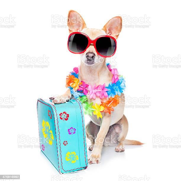 Dog summer holidays picture id476816992?b=1&k=6&m=476816992&s=612x612&h=y1qjm nu57oggkpopdoldbudo5zwnj3svjbdi2sxmow=