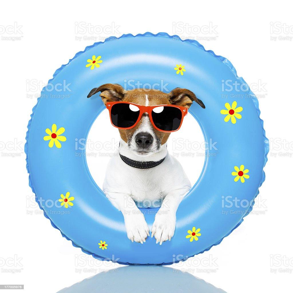 dog summer royalty-free stock photo