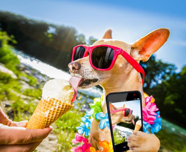 Dog summer vacation licking ice cream picture id1161941712?b=1&k=6&m=1161941712&s=612x612&w=0&h=9ms58m8bmrkhbmmsksqjdgohbe3cjvuxoj7l62q a6q=