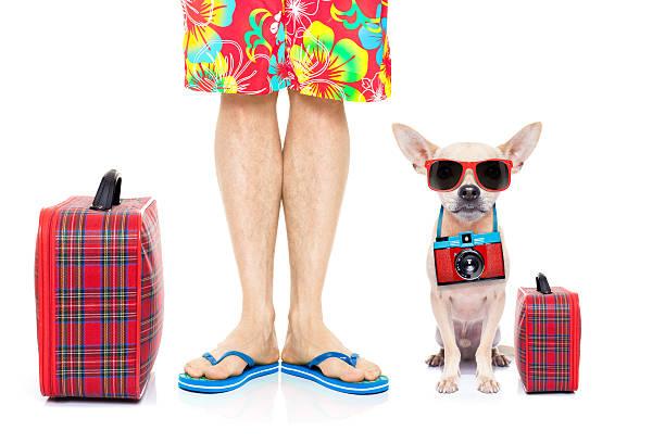 chien des vacances d'été - valise humour photos et images de collection