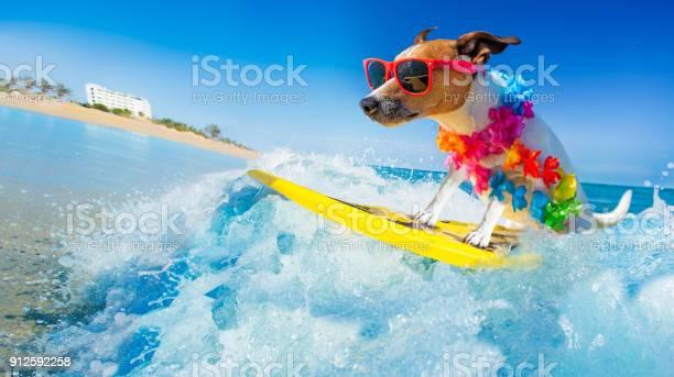 Dog surfing on a wave picture id912592258?b=1&k=6&m=912592258&s=612x612&h=lux4i6njaaxjdpgit8n2qh7fsdi upfq 2eqieujy9q=