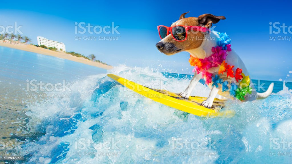 dog surfing on a wave stock photo