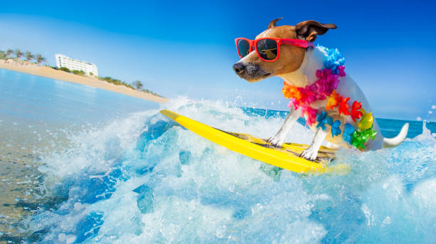 dog surfing on a wave - vacanze foto e immagini stock