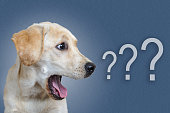 istock dog surprised on blue background, question mark 1044651596