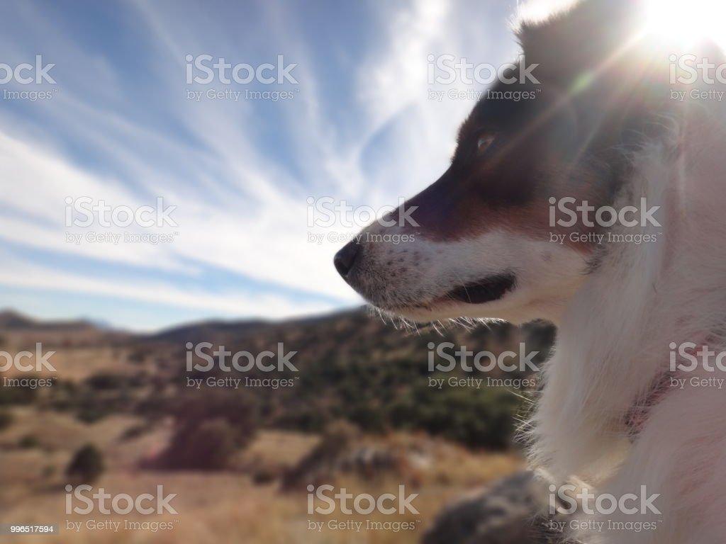 Dog surveying landscape stock photo