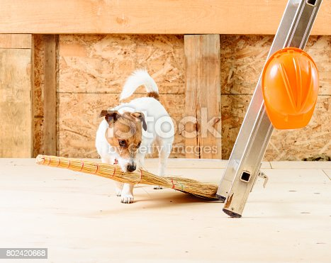 473158422 istock photo Dog sweeping floor and cleaning up with broom at construction site 802420668