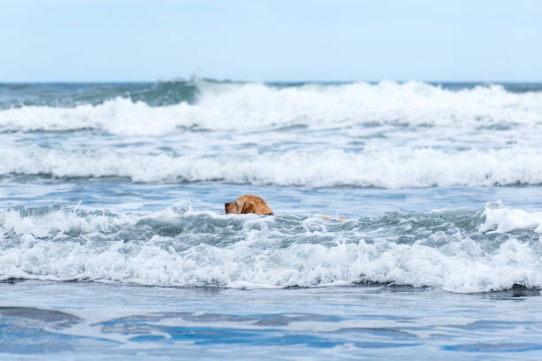 Dog swimming in the sea of the beach