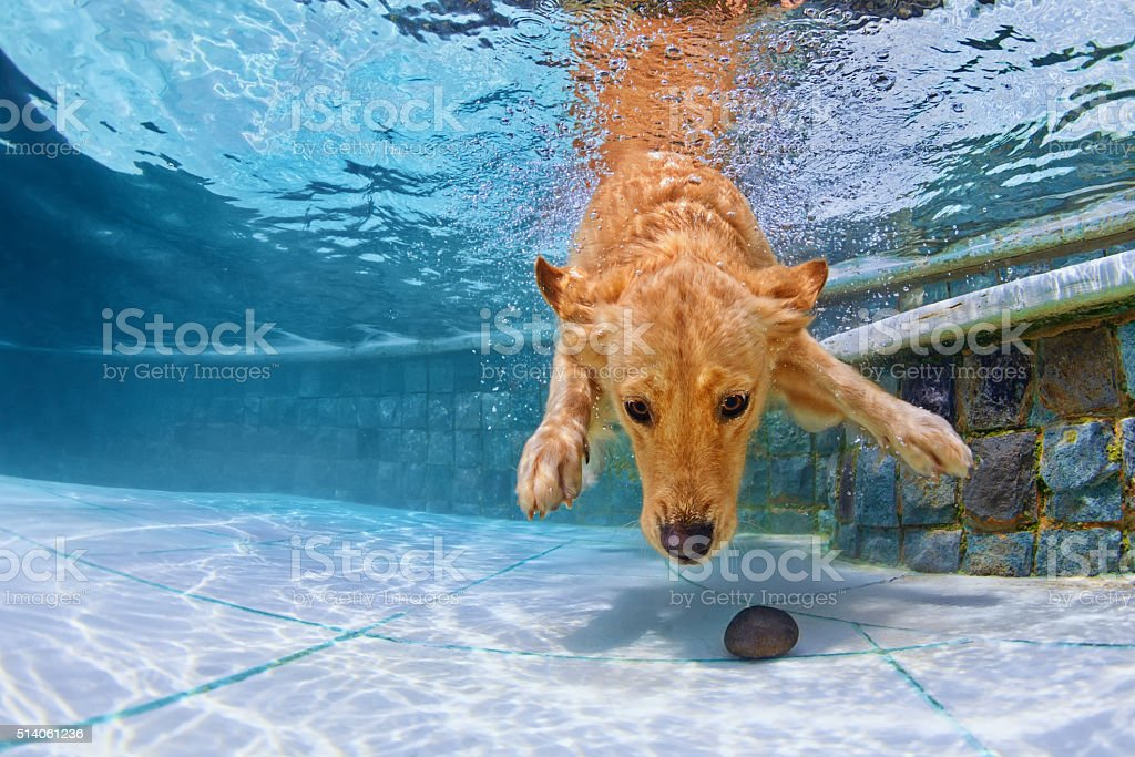 Dog swimming underwater in the pool stock photo