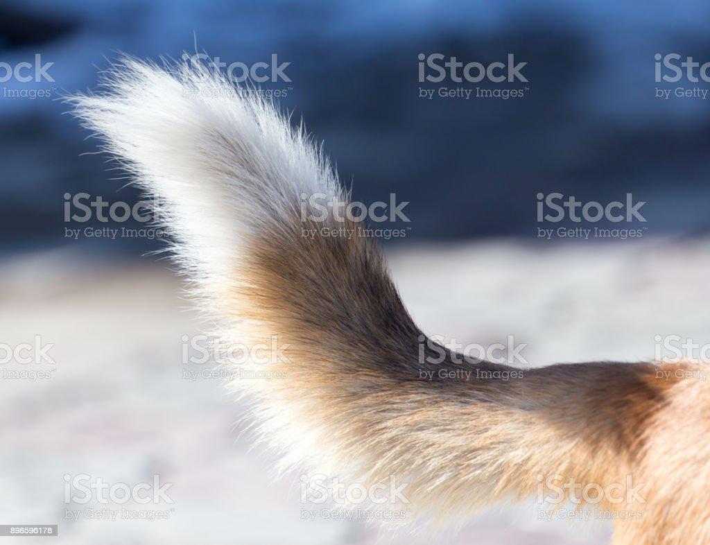 dog tail stock photo