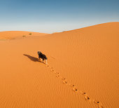 Small Terrier dog takes a lonely walk up a sand dune in the Sahara Desert in late afternoon. Trail of footprints left behind. Clear African desert sky.