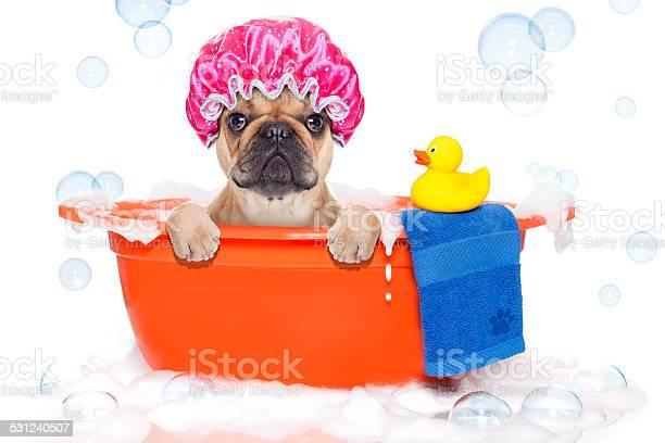 Dog taking a bath in bathtub picture id531240507?b=1&k=6&m=531240507&s=612x612&h=jziuls6cxux jdil4g 5gky3uvqawg7zfzcglif3wke=