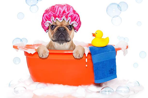 Dog taking a bath in bathtub picture id531240507?b=1&k=6&m=531240507&s=612x612&w=0&h=ieuzlc0mdyacmjpazompu au99qvghap6yhyztmaxru=